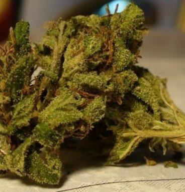 Afgan Goo Marijuana Strain