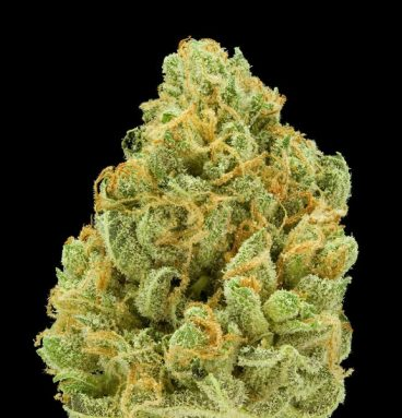 Bruce Banner Marijuana Strain