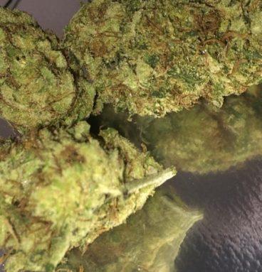 Dutch Treat Marijuana