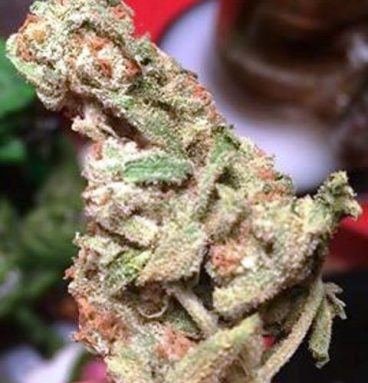 Frostitute Marijuana Strain