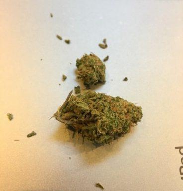 Golden Goat Marijuana