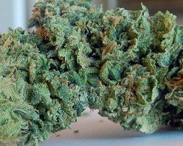 Green Apple OG Weed Strain