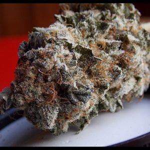 Jager Marijuana Strain