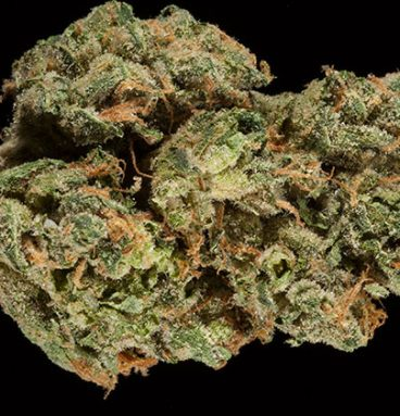 Superglue OG Marijuana Strain