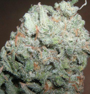 Trainwreck Marijuana Strain
