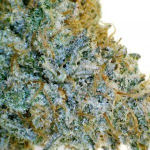 Sour Jack Herer Marijuana Strain