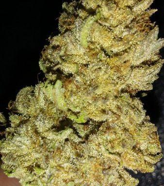 White Buffalo Cannabis